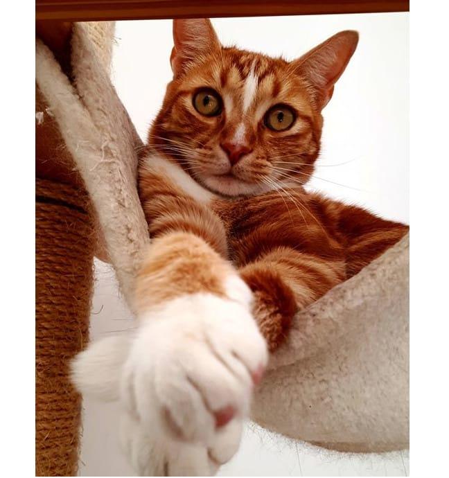 pension pour chats chatterie sainte cyle