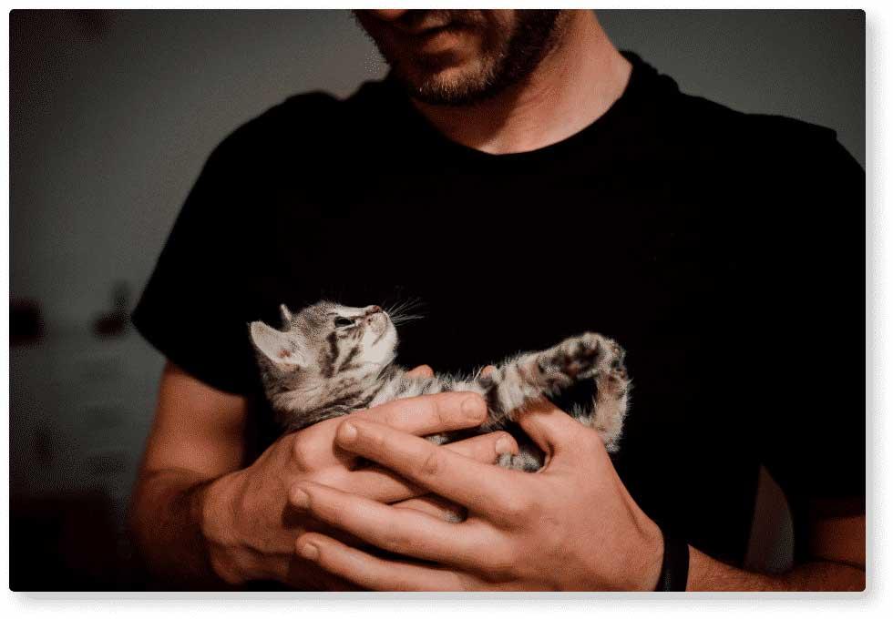 Homme qui s'occupe d'un chat dans une chatterie